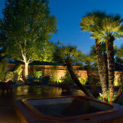 Why Palm Trees Do So Well in the Desert