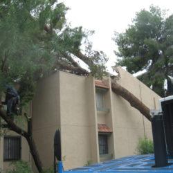 Keep Your Home and Yard Safe This Monsoon Season
